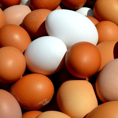 Difference-Between-Brown-Eggs-and-White-Eggs_Figure-2